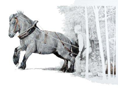 Attelages et voitures cheval - Dessin cheval de trait ...