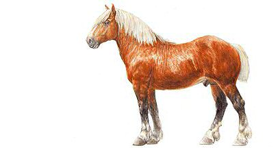 Dessin cheval comtois - Dessin cheval de trait ...