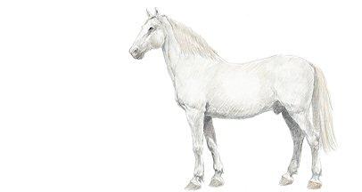 Les races de chevaux de poneys et d 39 nes - Dessin chevaux noir et blanc ...