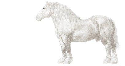 Les races de chevaux de poneys et d 39 nes - Dessin cheval de trait ...